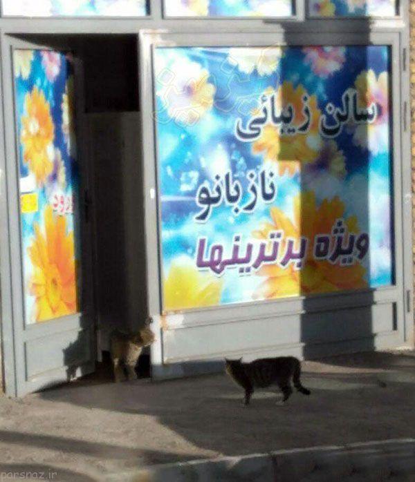 عکسهای خنده دار و خفن از سوتی های ایرانی
