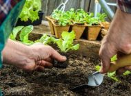 نکاتی درباره کاشت سبزیجات و گیاهان در باغچه خانه