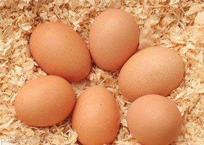 پنج نکته مهم در خصوص مصرف تخم مرغ