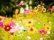 مهدیه الهی قمشه ای و شعر بهار