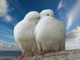ازدواج هوشیارانه را بشناسیم
