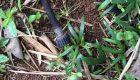 نکاتی درباره صرفه جویی مصرف آب در باغچه