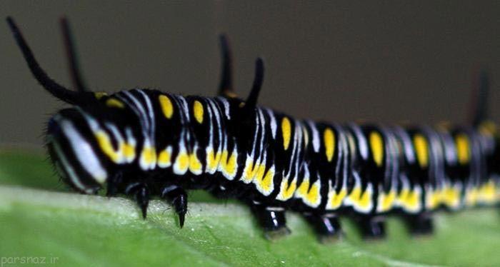 عکس هایی از زیباترین پروانه های دنیا در طبیعت