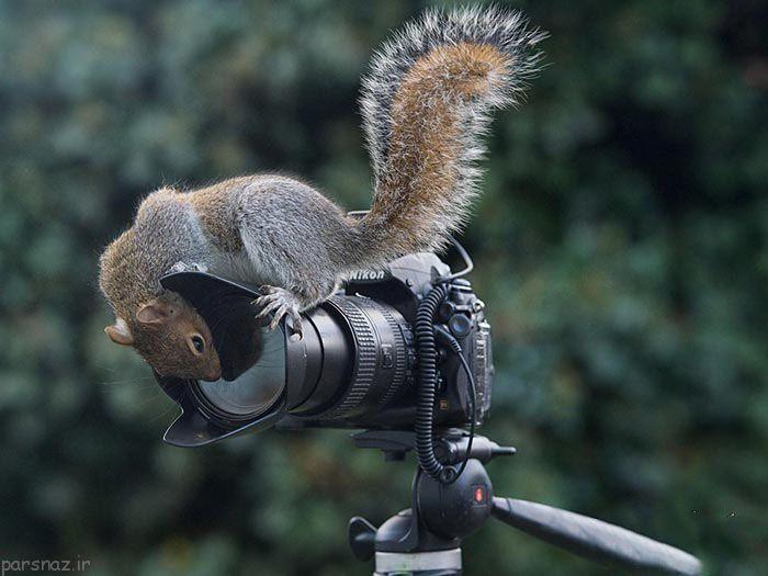 تصویر جالب و دیدنی از سنجاب باهوش