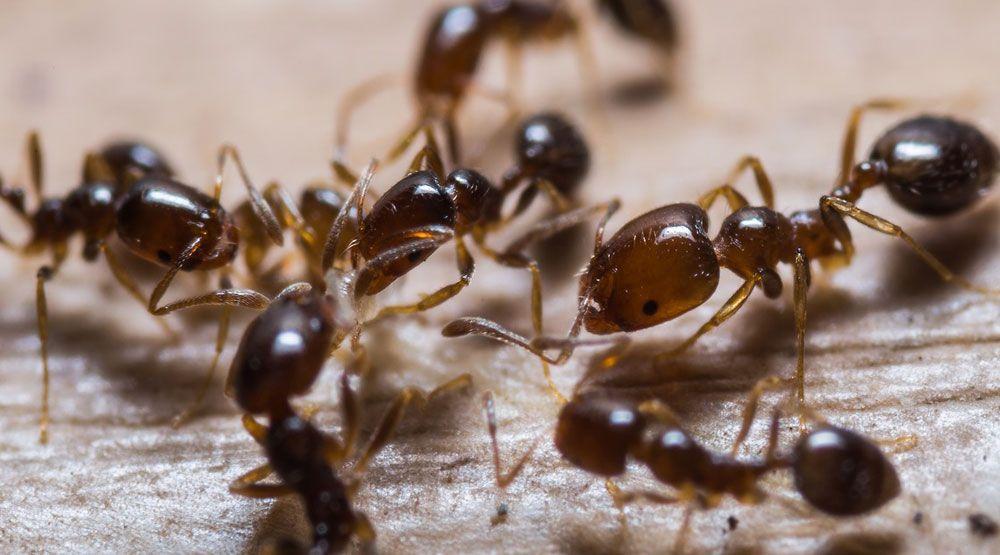 با حشرات موذی تابستانی مبارزه کنیم