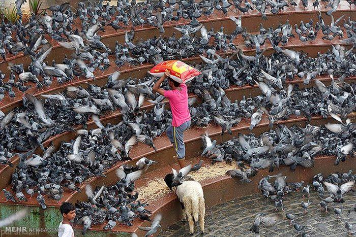 عکس های جالب خبری داغ و روز دنیا را ببینید