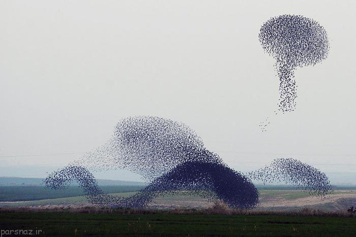 عکس های زیبا از پرواز پرنده های سار در آسمان
