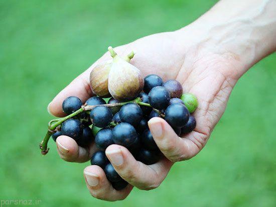 چگونه مربای انجیر خوش طعم و عالی درست کنیم؟