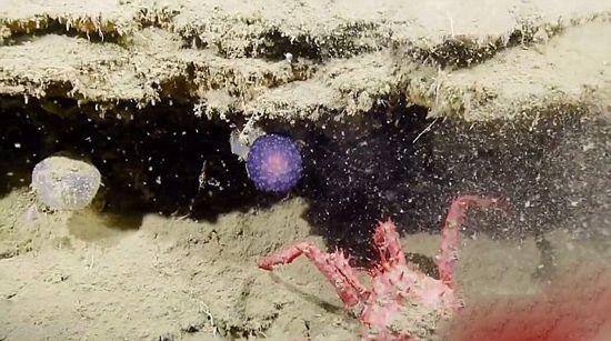 تخم موجودات فضایی در دریا کشف شد