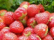 معرفی مواد غذایی غنی از ویتامین c