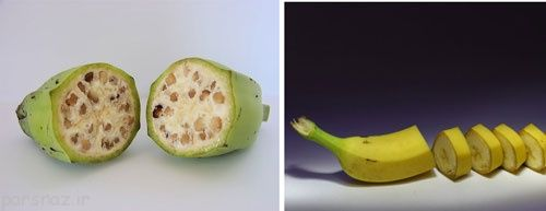 تصاویر موز و هندوانه در زمان های قدیم