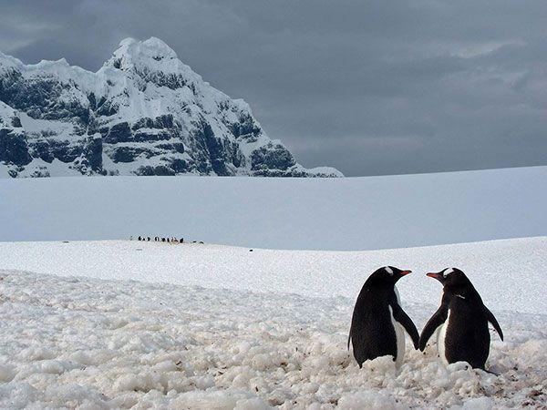 وصیت نامه صادقانه یک پنگوئن به پسرش (حکایت)