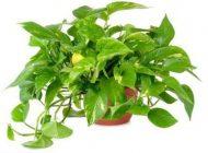 این گیاهان خواب راحت را به شما هدیه می دهند