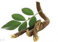 درمان جادویی زخم معده با این گیاه دارویی
