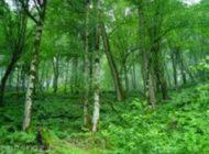 حفاظت از جنگل های ایران توسط ژاپنی ها