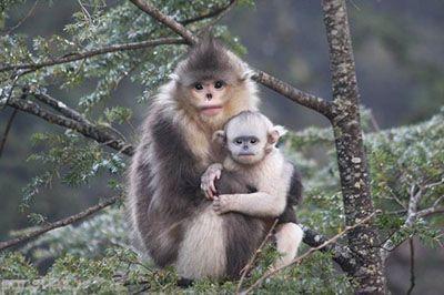 ناراحت ترین میمون جهان را ببنیید