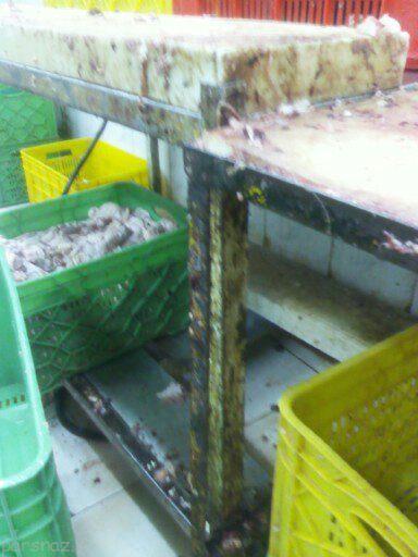 شستشوی مرغ در سرویس بهداشتی تایید شد
