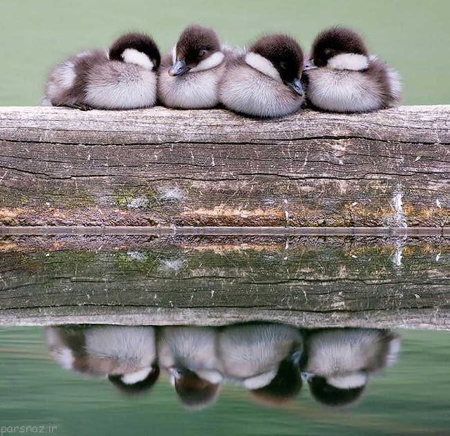 عکس های جالب پرنده ها در هوای زمستانی