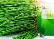 آب سبزه گندم نوشیدنی اعجاب انگیز
