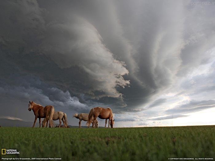 عکس های برگزیده نشنال جئوگرافیک در امسال