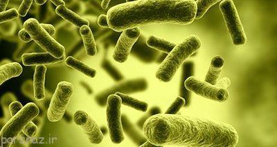 مراقب این باکتری خطرناک تنفسی باشید