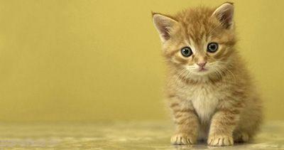 فواید نگهداری گربه خانگی را بدانید
