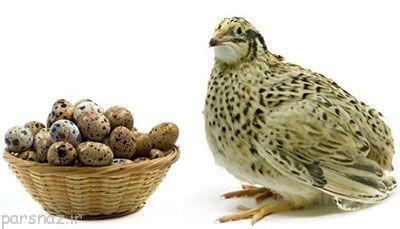 تخم بلدرچین و فواید آن برای بدن