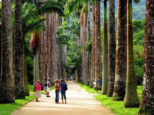 با پارک های جنگلی شهر ریو المپیک آشنا شوید