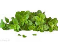 خواص مفید گیاه پینه را بشناسید