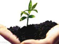 دردهای استخوانی را با طب گیاهی از بین ببرید