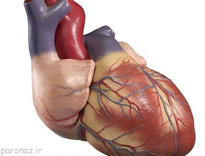قلب انسان و دانستنی های عجیب درباره آن