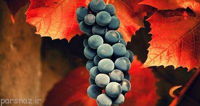 انگور در سلامت قلب و عروق تاثیر گذار است