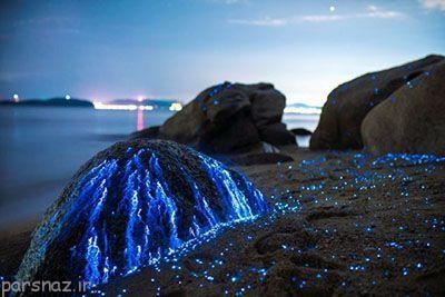 این سنگ ها در ساحل ژاپن گریه می کنند