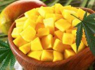 میوه انبه و خواص عالی آن را بشناسید