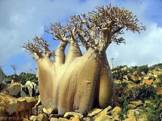 جزیره سوکوترا غریب ترین مکان روی زمین