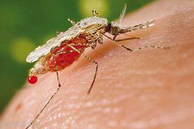 گزیدگی حشرات و بررسی مفصل آن