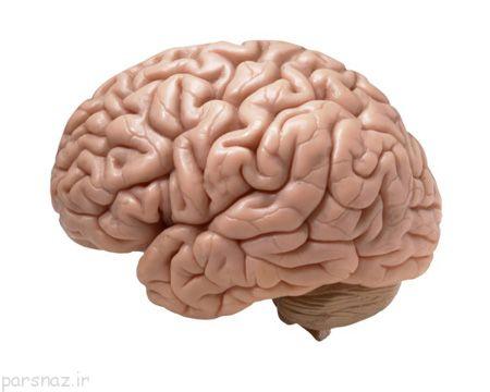 چرا مغز انسان ها بزرگ است؟