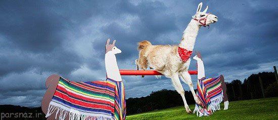 باورنکردنی ترین رکوردهای عجیب گینس در جهان (5)