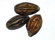درباره گیاه دارویی هلیله سیاه و فواید آن