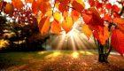 متن های زیبای پاییزی را بخوانید