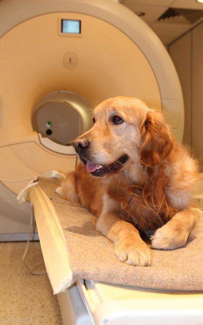 سگ ها نحوه بیان انسان ها را می فهمند