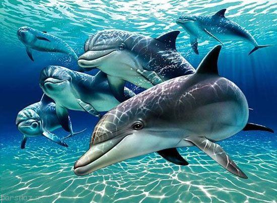 عکس های دلفین های باهوش ترین در دریاها