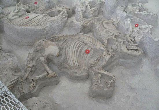 این آثار باستانی به طور اتفاقی کشف شدند