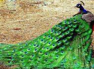 داستان دشمن طاووس از مثنوی معنوی
