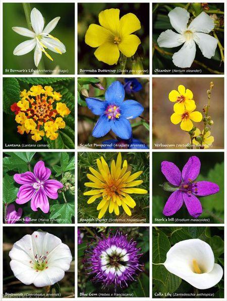 درباره نحوه پیدایش گل های زیبا