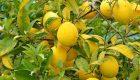 استفاده از آب لیمو ترش و فواید آن