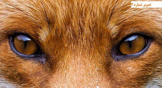 معرفی انواع چشم در جانوران مختلف