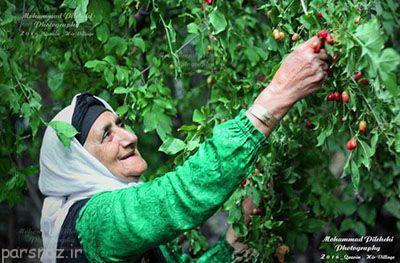 تصاویر زیبا و دیدنی از سراسر کشور ایران در شهریور ماه