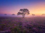 تصاویر طبیعت کشور هلند بسیار زیبا