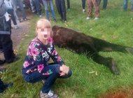 عکس سلفی دختران با خرس وحشی وسط مدرسه
